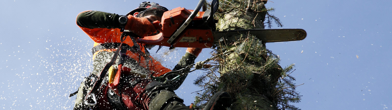 Tree-surgeon-aberdeen.jpg